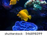 Yellow Tropical Fish In An...