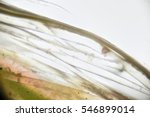 trichomes plant. micrograph ... | Shutterstock . vector #546899014