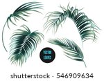 vector palm leaves  jungle leaf ...
