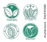 vector mint leaf logo icons or... | Shutterstock .eps vector #546935380