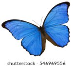 A Blue Butterfly On The White...