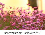 pink flowers background blur of ... | Shutterstock . vector #546989740