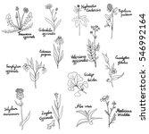 vector set of hand drawn... | Shutterstock .eps vector #546992164