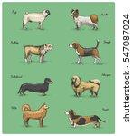 dog breeds engraved  hand drawn ... | Shutterstock .eps vector #547087024
