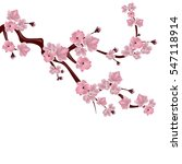 japanese cherry tree. a branch... | Shutterstock .eps vector #547118914