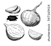 onion hand drawn vector set.... | Shutterstock .eps vector #547165414