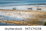 Small photo of Fisher Boats at low tide near seaweed plantations algal - Nusa Penida, Bali, Indonesia