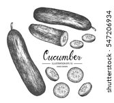 Cucumber   Vegetable Vector...
