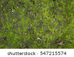 moss on wall or ground texture... | Shutterstock . vector #547215574