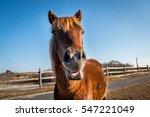 Assateague Island Wild Horse ...