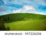 herd of cows in a pasture on... | Shutterstock . vector #547226206