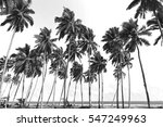coconut trees at tropical beach.... | Shutterstock . vector #547249963