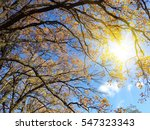autumn forest  background in a... | Shutterstock . vector #547323343