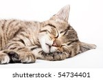 Stock photo sleeping cat 54734401