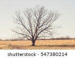 a single tree in a field on a... | Shutterstock . vector #547380214