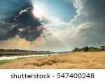 Summer Harvest And Landscape