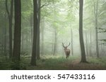 Stunning image of red deer stag ...
