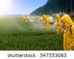 Farmers spraying pesticide in...