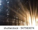 Sun Rays Coming Through Trees...