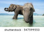 Stock photo two baby elephants playing and washing into the sea 547599553