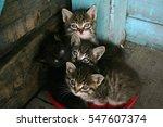 Stock photo kittens near the door 547607374