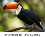 toucan on the branch. bird park ... | Shutterstock . vector #547624558