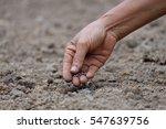 planting | Shutterstock . vector #547639756