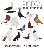 Poultry Farming. Pigeon Breeds...