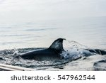 shark fin above water. closeup... | Shutterstock . vector #547962544