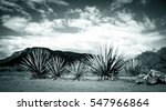 agave tequila landscape to... | Shutterstock . vector #547966864