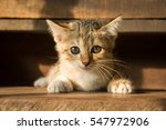 Stock photo the cute cat in morning cute cat alone cat sad kitten cat 547972906