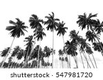coconut trees at tropical beach ... | Shutterstock . vector #547981720