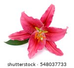 Beautiful Lily Flower Isolated...