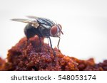 Fly In Food Conveying Pathogen...