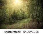 dark moody forest with path ... | Shutterstock . vector #548098318