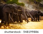 Elephants In Chobe National...