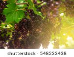 sun beam shade on red grape on... | Shutterstock . vector #548233438