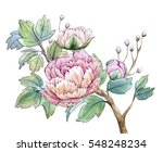 watercolor illustration floral... | Shutterstock . vector #548248234