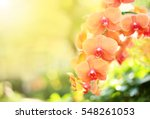 Beautiful Orchid Flower With...
