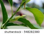 Different Species Of Ladybugs...