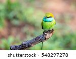 green bee eater or merops... | Shutterstock . vector #548297278