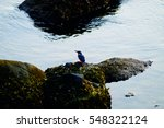 Kingfisher Bird On The Rock....