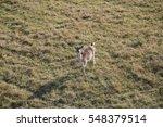 Beautiful Deer In The Meadow ...