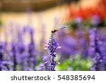 Dragonfly Custom Flowers.