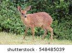 jongensfontein | Shutterstock . vector #548485039