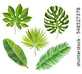 set of tropical palm leaves ... | Shutterstock .eps vector #548527378