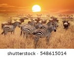 Zebra At Sunset In The...