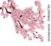 japanese cherry tree. the... | Shutterstock .eps vector #548666764