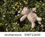 Toy Bear On The Ground...