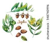 watercolor jojoba collection... | Shutterstock . vector #548740996